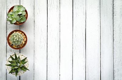 Inspirasi Pernikahan Bertema Kaktus