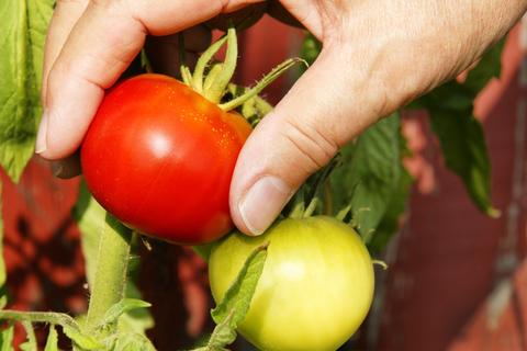 6 Makanan Pencegah Kanker Serviks