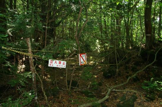 Cerita di Hutan Aokigahara