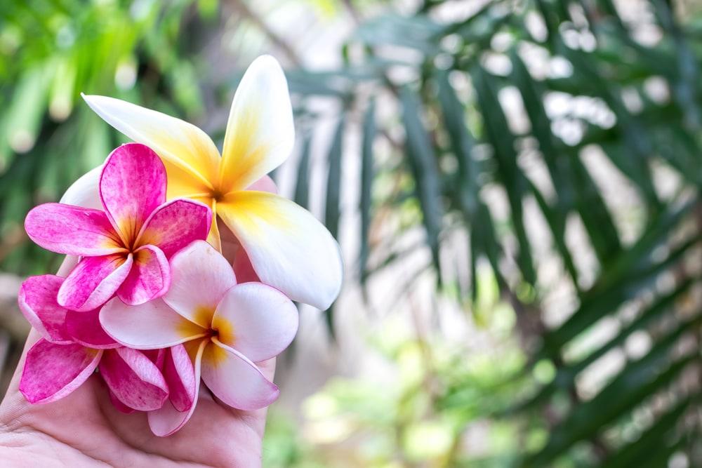 Tips Berlibur Sendirian di Bali