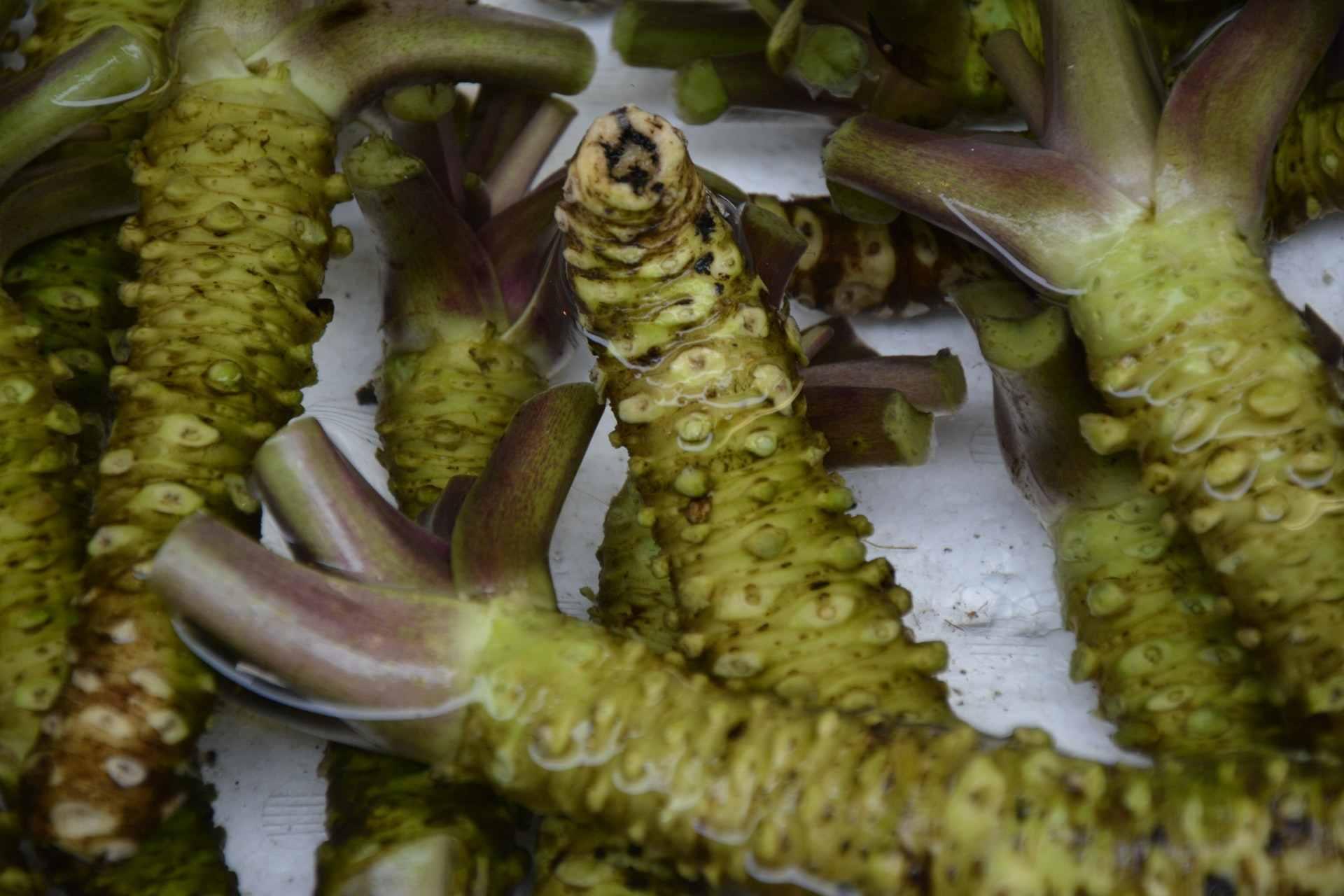 apakah wasabi bisa jadi solusi atasi rambut rontok