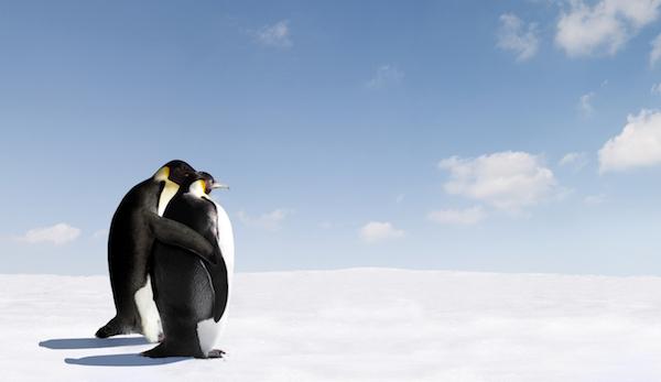 Pelajaran Cinta yang Bisa Dicontek dari Penguin