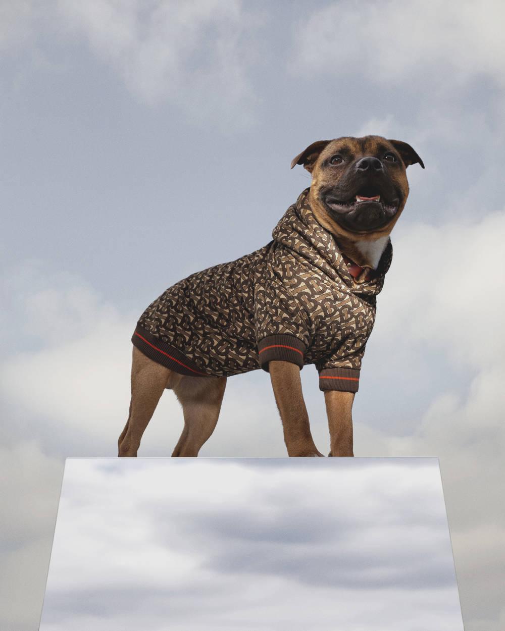 Burberry Hadirkan Koleksi Spesial untuk Anjing