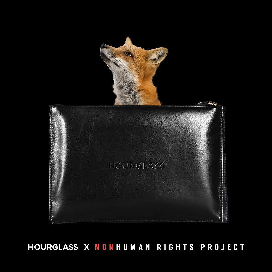 Hourglass Berkolaborasi Dengan Nonhuman Rights Project