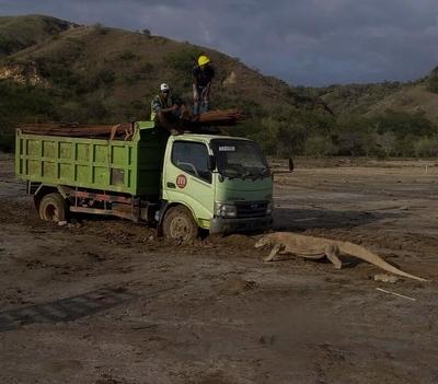Proyek Jurassic Park Di Pulau Komodo Menimbulkan Pro Kontra
