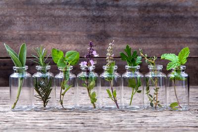 Tanaman Herbal untuk Menyembuhkan Kanker Serviks
