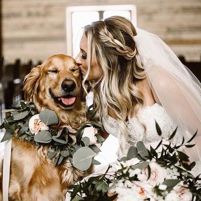 Yang Bisa Dilakukan Hewan Peliharaan di Pernikahan Anda
