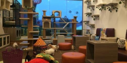 Cutie Cats Cafe, Kafe Kucing Pertama Di Indonesia
