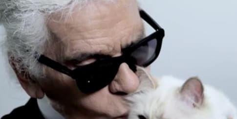 13 Fakta Choupette, Kucing Kesayangan Karl Lagerfeld