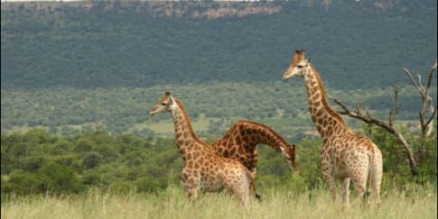 Indahnya Taman Nasional Baluran