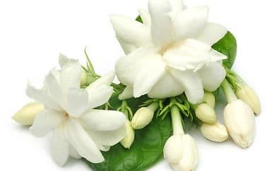 8 Rekomendasi Jenis Aromaterapi dan Manfaatnya Bagi Tubuh