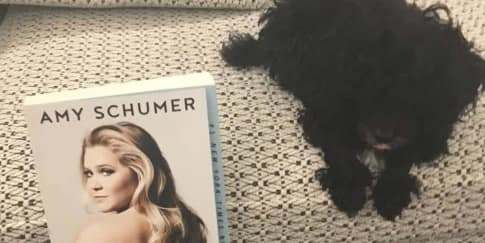 Intip Anjing Peliharaan Baru Amy Schumer