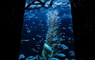 Jakarta Aquarium Kembali Dibuka Dengan Protokol Kesehatan