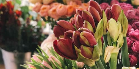 Memilih Bunga yang Tepat untuk Hadiah di 'Hari Ibu'