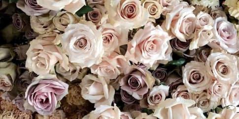 Tips Mendapatkan Harga Bunga Murah untuk Pernikahan