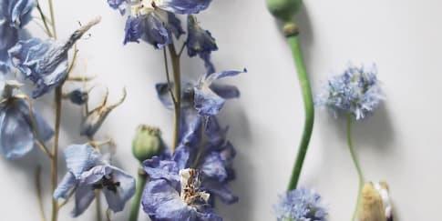 Tips Menggunakan Bunga Kering untuk Dekorasi Pernikahan
