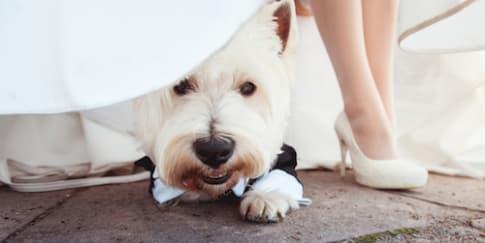 Alasan Hewan Peliharaan Wajib Diundang Ke Pernikahan