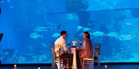 5 Hal Baru Dari Jakarta Aquarium & Safari Untuk Tahun 2021