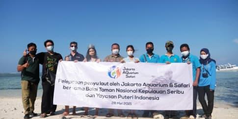 Pelepasliaran Penyu dan Tukik Jakarta Aquarium & Safari