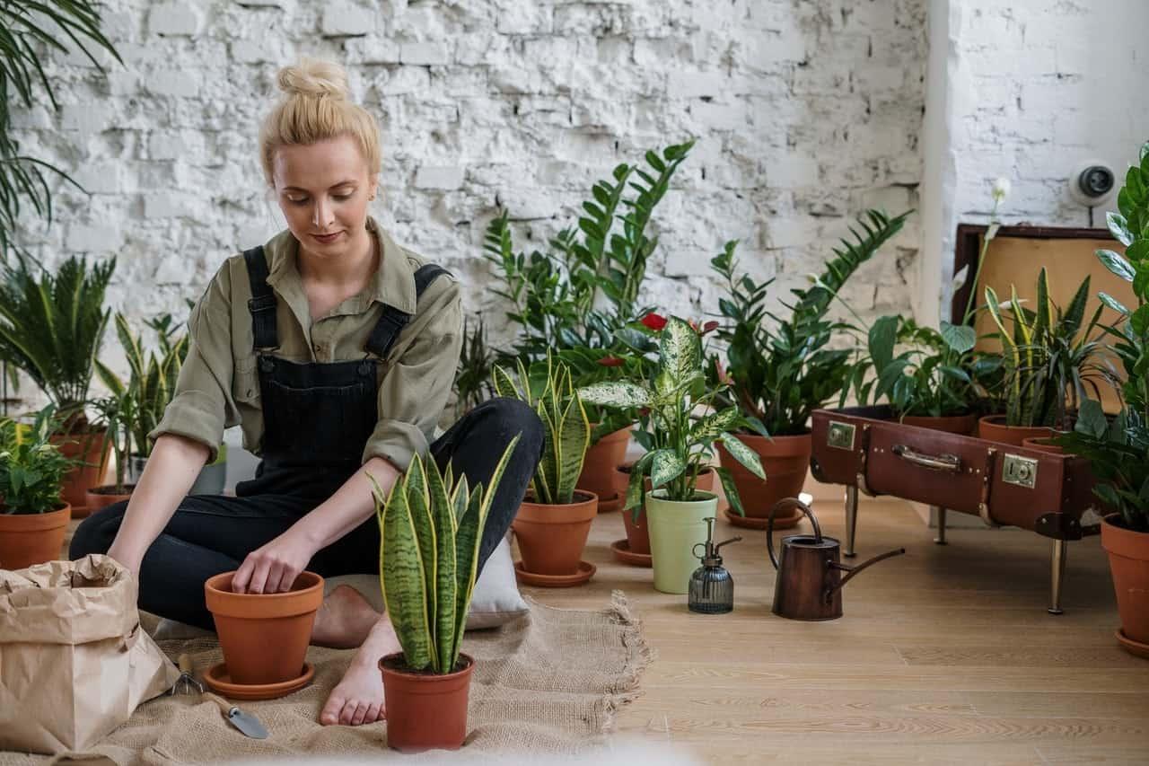 Peralatan Berkebun Wajib Punya Di Rumah