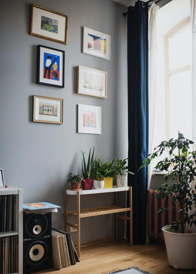 4 Tanaman Yang Bisa Membersihkan Udara Di Rumah